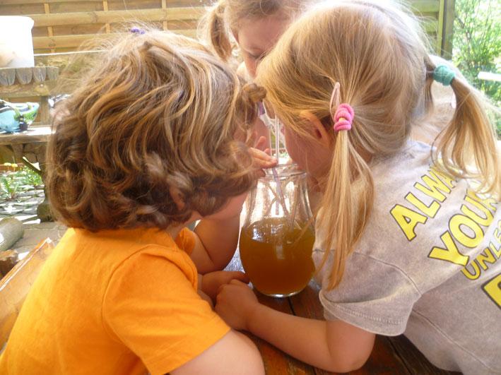 limonade-aus-löwenzahnblüten